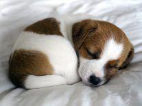 Puppies across Ireland to be recruited for landmark study