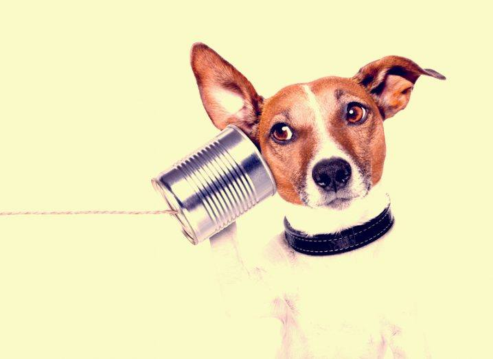 dog talking through tin can phone