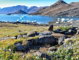 Taller tundra plants are taking over the warming Arctic