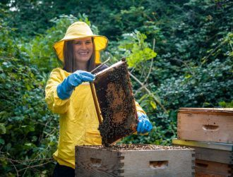 Irish heather honey 'comparable to manuka honey' in antioxidant properties