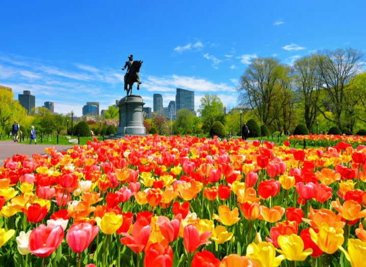 George Washington statue in Boston surrounded by colourful red, yellow and orange tulips.
