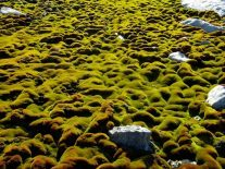 Research shows climate change is damaging Antarctica's ancient moss