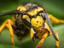 Scientists say wasps don't deserve their bad reputation