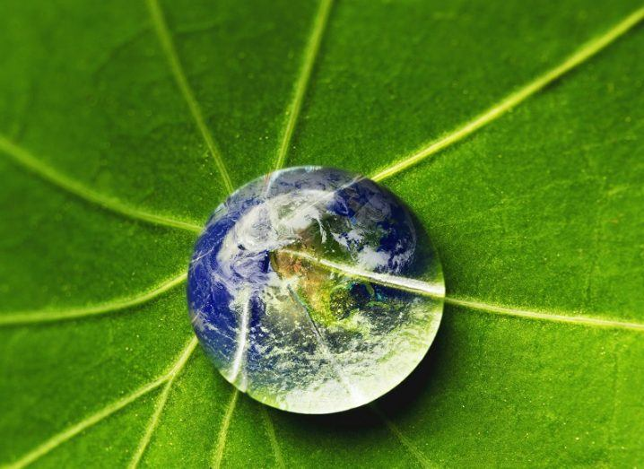 The world in a drop of water on a leaf.