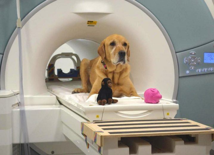 Good Dog! Study Reveals Canines Can Understand Some Words