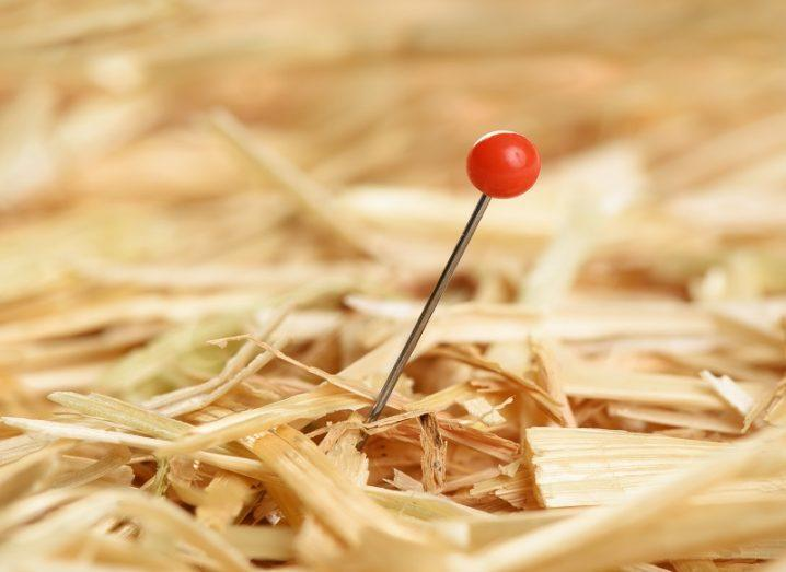 Close-up of a needle in haystack, representing data journalism.