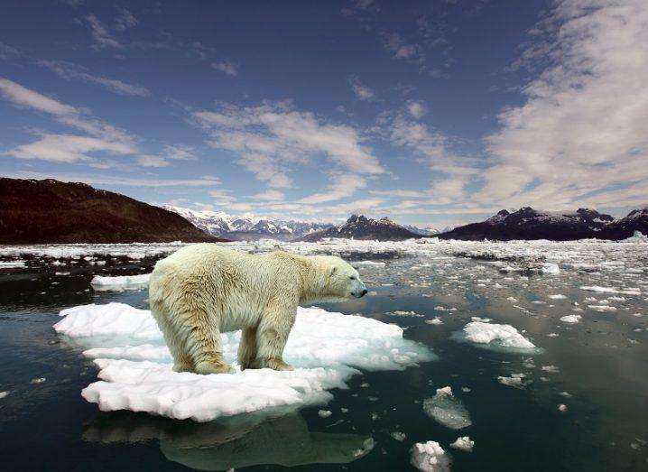 Polar bear standing on a shrinking ice island near a glacier.