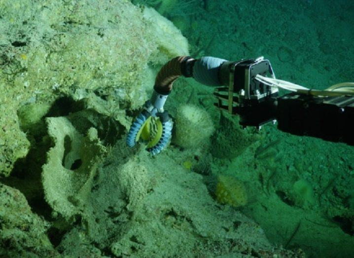 Close-up of the soft robotic arm grasping an object underwater.
