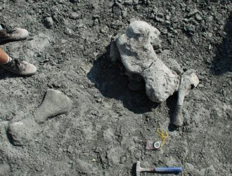 Bones of gigantic mammal-like creature a 'once-in-a-lifetime discovery'