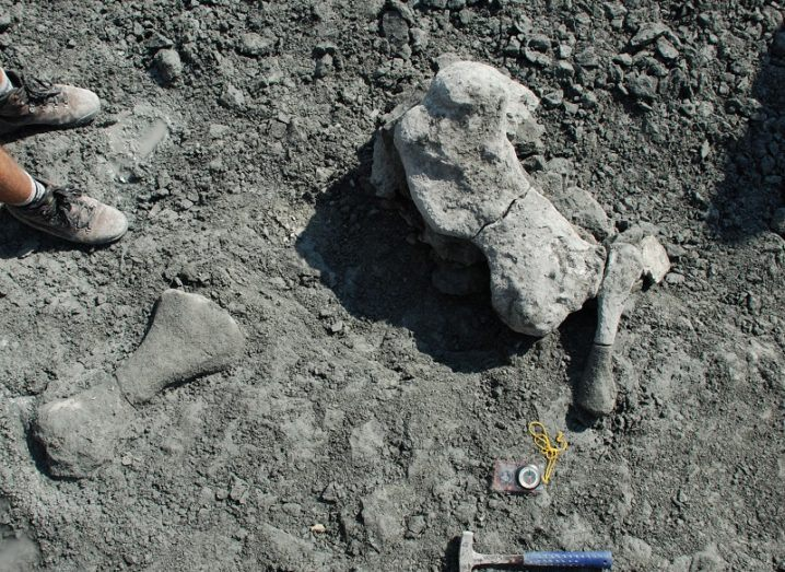 bones on a grey stony surface with a rock hammer nearby, reflecting palaeontology.