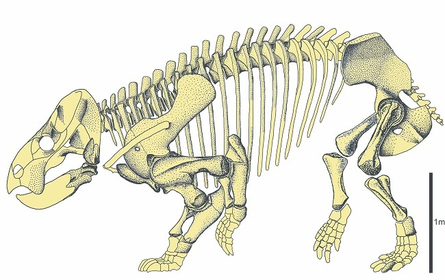 Skeleton of Lisowicia bojani, similar to an elephant in size.