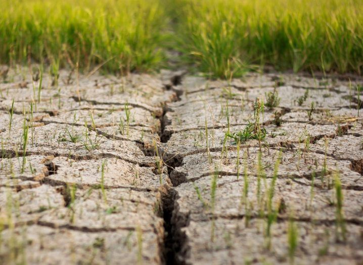 Dry, cracked soil with a green rice field in the background.