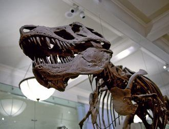 How did the biggest dinosaurs stay cool? With built-in air conditioning