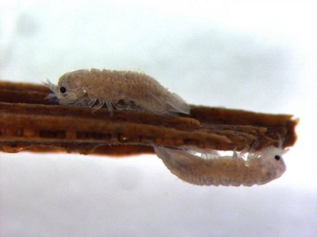 Two gribble on either side of a piece of wood.
