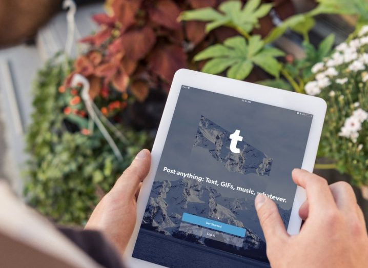 A hand holding an iPad displaying the Tumblr app. Plants and succulents in the background.