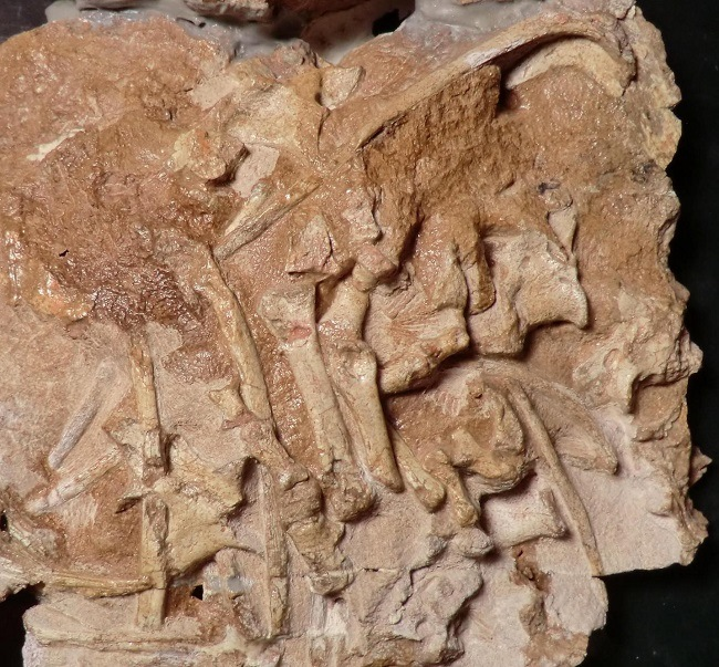 A slab of brown stone containing the creature's fossilised skeleton.