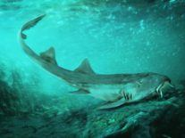 Prehistoric shark discovered with bizarre 'spaceship-shaped' teeth