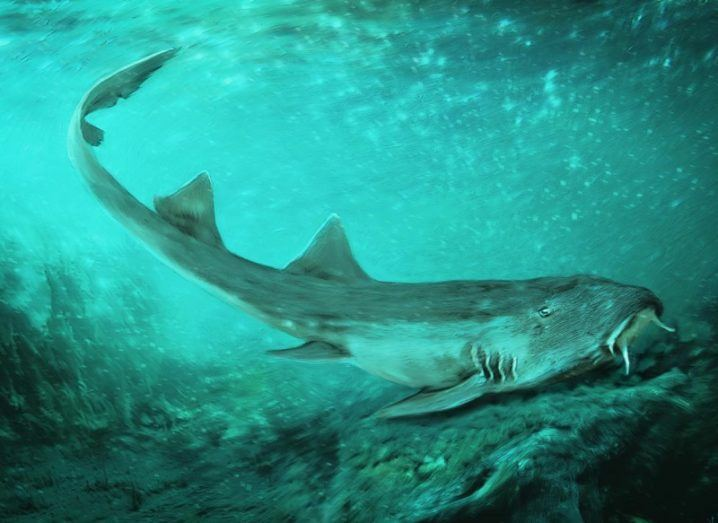 Illustration of the slim galadon shark with two fins travelling across the seafloor.