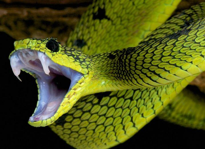Luminous green snake opening its jaw to reveal sharp fangs.