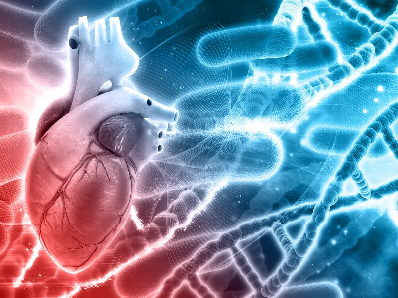 3d medical background with DNA strands and heart.