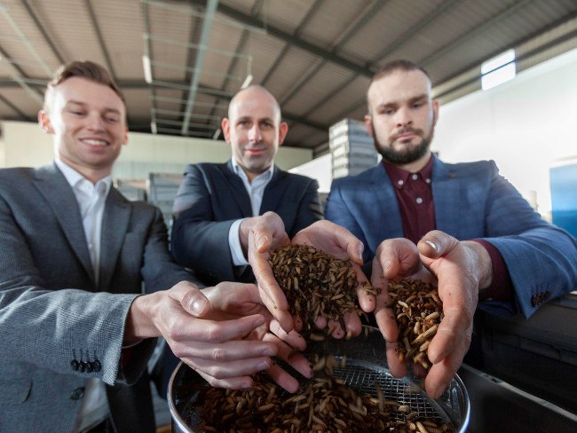 Three men holding fly larvae in their hands.