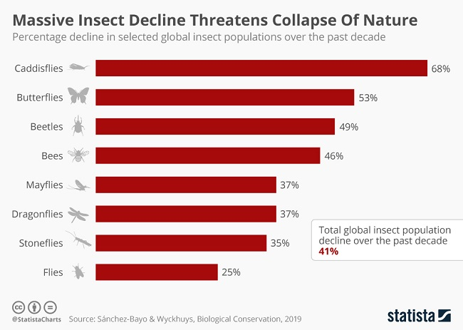 Infographic showing rates of insect decline with caddisflies at the top.