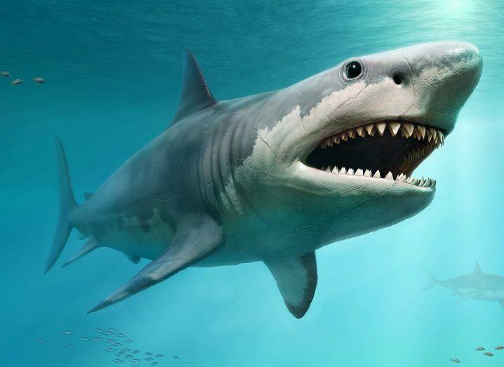 3D render of a megalodon shark swimming in an ocean.