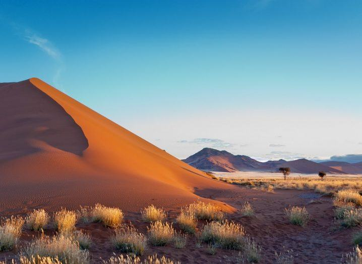 Sparse grass and sand dune in Namibia against desert background.