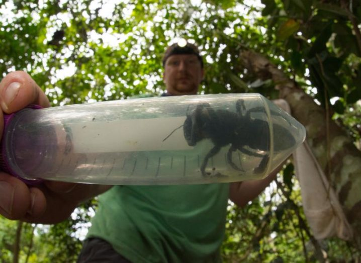 Entomologist Eli Wyman holding the Wallace's giant bee in a plastic container, demonstrating its size.