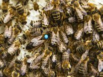 Fish and bees in different countries now on speaking terms thanks to robots