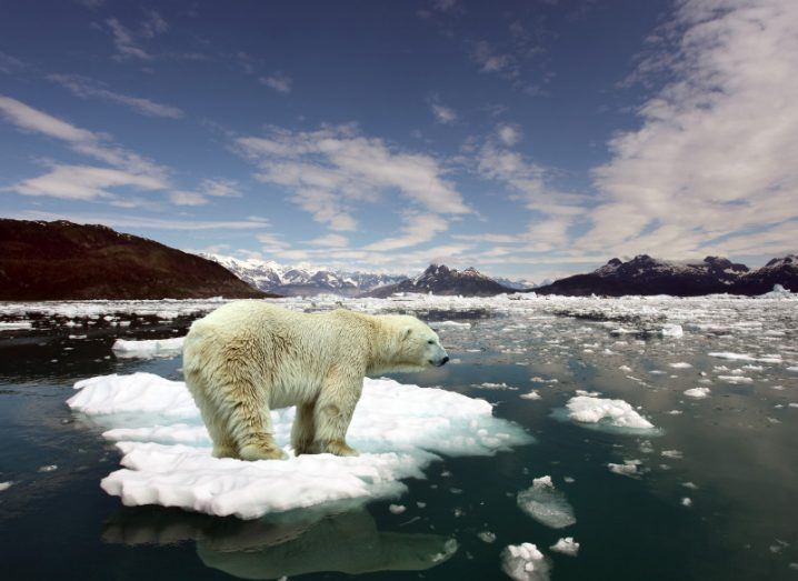 Impact of climate change as a polar bear stands amid a sea of melting ice.