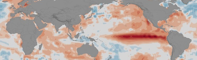 Stretched map of the globe showing increased ocean temperatures caused by El Nino.