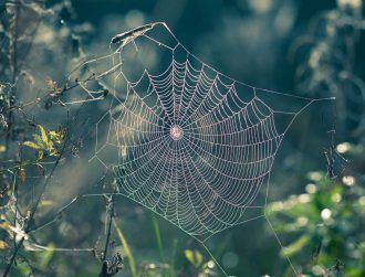 Unusual property in spider silk could be used in robotic muscles