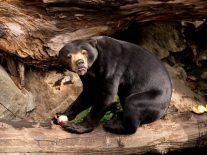 Human superiority challenged after surprising discovery in tiny bears