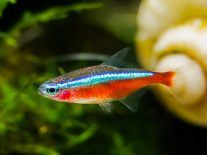 Fish inspires new camouflage material that can quickly morph colour