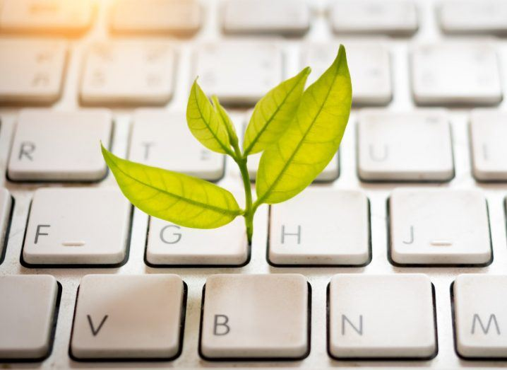 Small green plant growing from white computer keyboard, symbolising growth of IT spend.