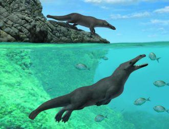 Truly bizarre ancient four-legged whale discovered off coast of Peru