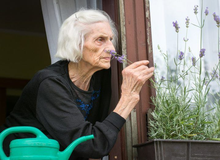 Elderly woman in a black dress smelling flowers outside her window, but doesn't seem to be enjoying them.