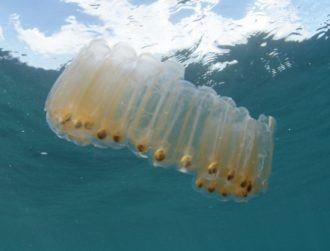 Microplastics in squishy creature's poo hurt ocean's ability to absorb CO2