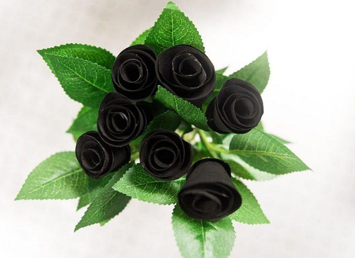 Birdseye view of a bouquet of black roses and green flowers.