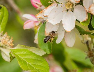 ApisProtect and Inmarsat develop early warning system to save the bees
