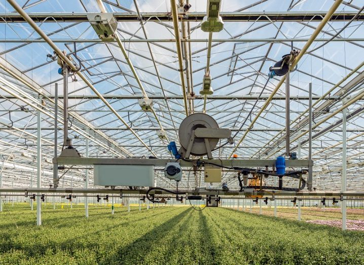 Large robot suspended by cables spraying water in a large industrial greenhouse.