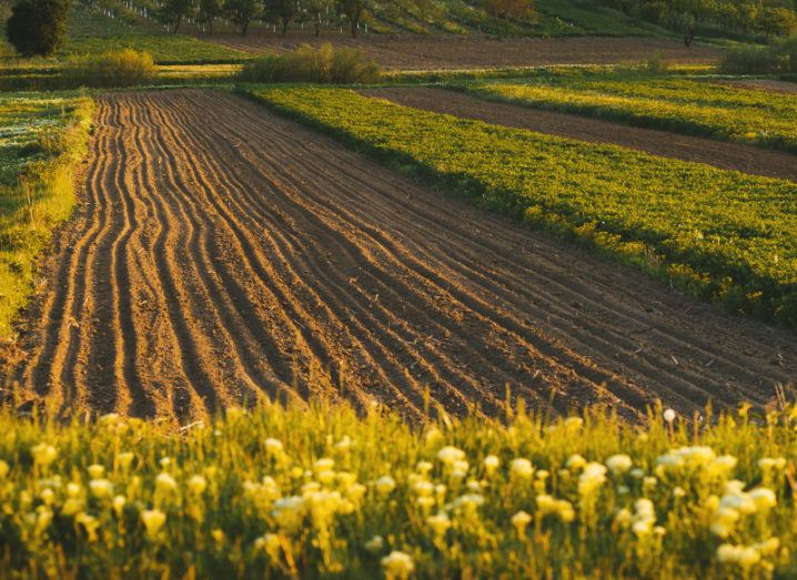 View of tilled fields in agriculture flanked with manicured patches of wildflowers drenched in sunlight.
