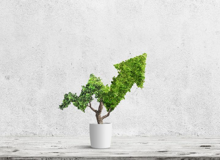 A small, bushy, green potted plant has been trimmed to take the shape of an arrow graph moving upwards.