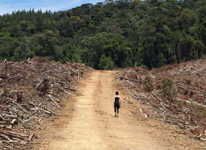 A person dressed in black walking alone down a dirt track in a forest. Beside the track are the remnants of trees that have been cut down.