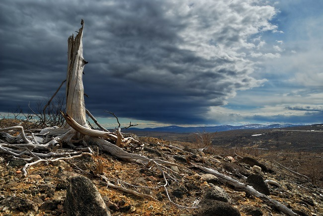 A single tree stump in a dead forest with a large storm cloud rolling in.