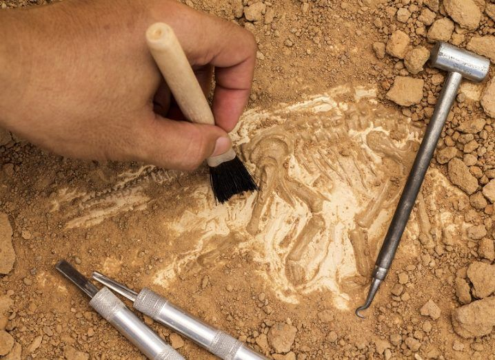 Hand with a brush dusting off fossilised remains of a dinosaur with a number of digging implements beside it.