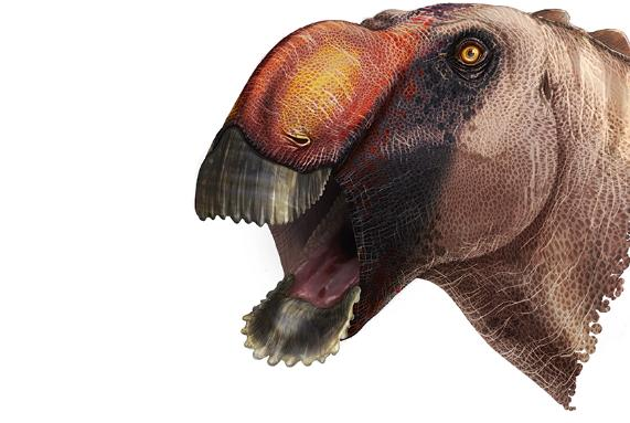 Illustration of the duck-billed dinosaur with an open mouth coloured brown and orange.