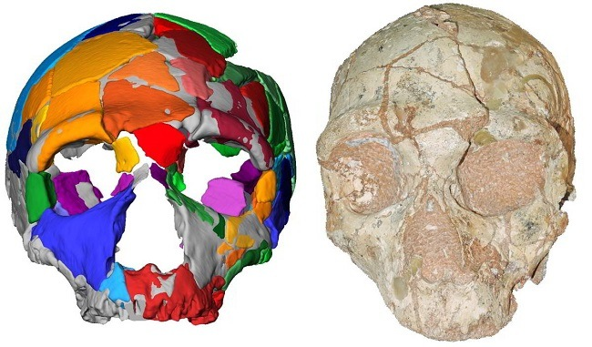 Side-by-side comparison of a 3D render of the Neanderthal skull and an image of the Apidima 2 skull.
