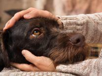 10 minutes of petting cats and dogs can significantly reduce stress